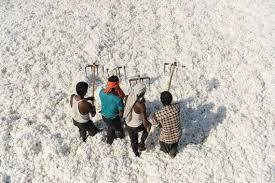 ورود اولین محموله پنبه وارداتی با کیفیت از هندوستان به همت شرکت ایده گستر صنعت